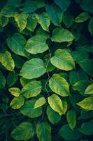 groene plant bladeren in de natuur groene achtergrond foto