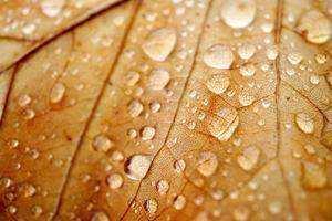 druppels op het bruine blad in regenachtige dagen foto