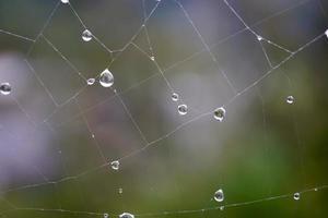 druppels op het spinnenweb in regenachtige dagen foto