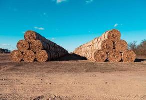 enorme stapels stro hooi in balen gerold op een geoogst veld tegen een blauwe lucht foto