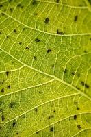 groene bladaders groene achtergrond foto
