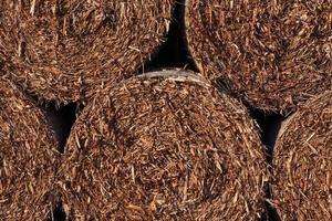 droge stro hooi textuur achtergrond foto