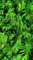 tropisch groen blad foto
