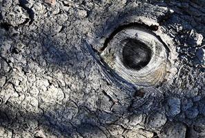 abstract oog op de schors van een oude boom foto