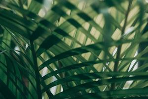 wazig tropisch groen blad buiten het raam foto