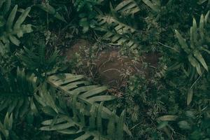 tropische groene bladachtergrond foto