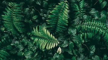 tropisch groen blad in donkere toon foto