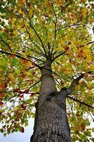 bomen met gele bladeren in de herfstseizoen foto