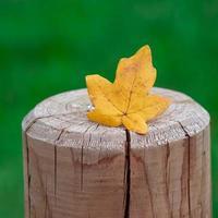 geel blad in de herfst foto