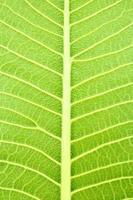 textuur van blad foto