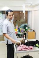 dierenarts zorg ziekte puppy in veterinaire kliniek thailand foto