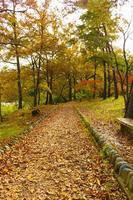 herfstkleuren bij nagatoro saitama foto