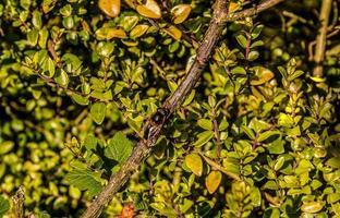 kleine bijen op een tak foto