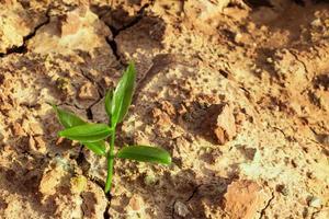 de spruit overleeft op gebarsten grond in een droge omgeving foto