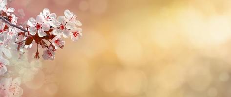 abstracte lente achtergrond foto