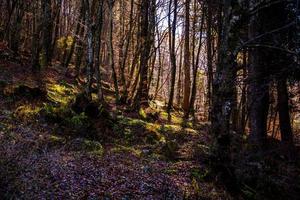zon filtert door het bos een foto