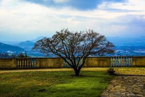 boom met panorama foto