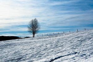 eenzame boom in de sneeuw foto