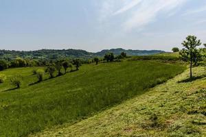 2021427 sovizzo-bomen en gazons foto