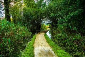 pad tussen moerassen foto