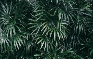verticale tuin met tropische groene blad donkere toon foto
