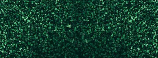 tropisch groen blad donker toonthema als achtergrond foto