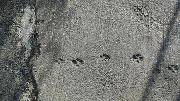 hondvoetafdrukken op de grijze achtergrond van de cementvloer foto