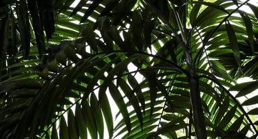 palmbladeren in de tuin tropische achtergrond foto