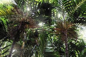 palmboom in de tuin tropische achtergrond foto