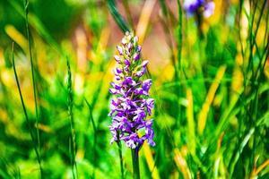 wilde paarse bloemen foto