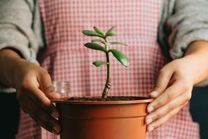 vrouw met een groeiende plant en een fles water foto