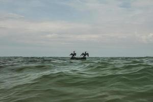 twee aalscholvers drogen hun vleugels op een steen in het midden van de zee foto