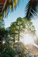 een groothoekopname van een tuin met supergroene bomen foto