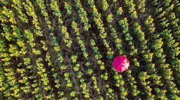 bloementuin achtergrond met prachtige kleurrijke parasols foto