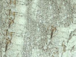 close-up van de boomstam voor achtergrond of textuur foto