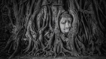 boeddha hoofd in wat mahathat ayutthaya foto