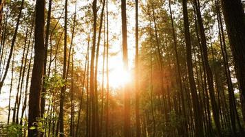 foto's van natuurlijke landschappen in bossen en rijstvelden die er heel fris uitzien foto