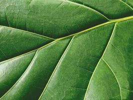 macro groen blad textuur achtergrond natuur bladeren foto