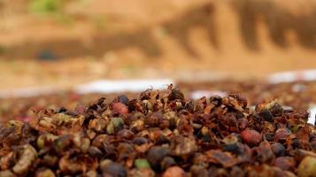 foto van koffiebonen die nog steeds rauw drogen in fel zonlicht