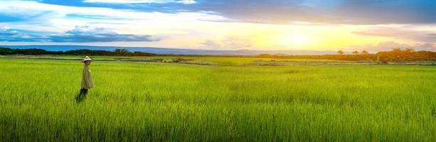 vrouwelijke boer staat op zoek naar groene rijstzaailingen in een rijstveld met prachtige lucht en wolken foto