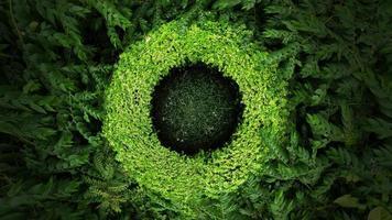 bovenaanzicht van tropisch groen blad foto