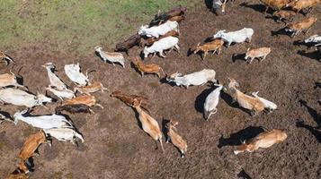 uitzicht vanaf dronevlucht over weiland op het platteland foto