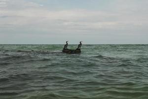 twee aalscholvers kijken in de verte op een steen in het midden van de zee foto