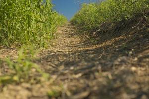 pad groen gras en blauwe lucht foto