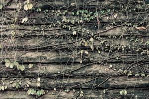 oude grunge houtstructuur met bladeren foto