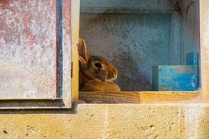 konijn in de schaduw foto