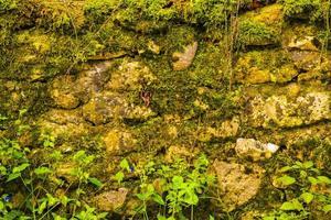 bemoste stenen muur foto