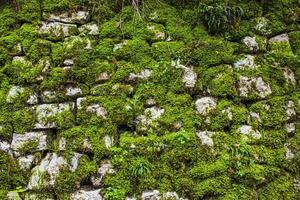 muur met oude stenen en mos foto