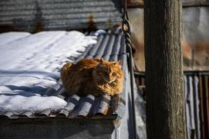 kat in de zon foto