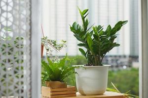 huis en tuin concept met zanzibar gem foto